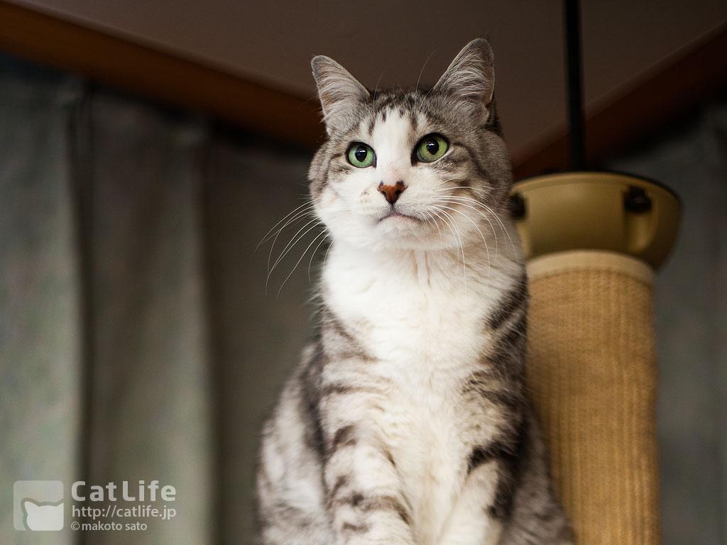 CatLife猫写真壁紙 2015年3月