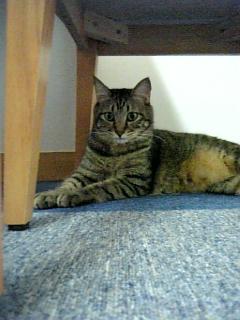 image/catlife-2005-10-11T18:46:36-1.jpg