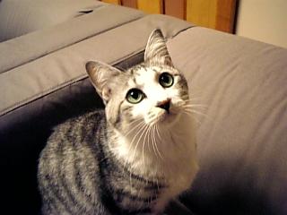 image/catlife-2005-10-22T02:14:06-1.jpg