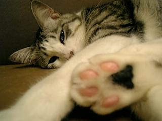image/catlife-2005-10-23T01:26:39-1.jpg