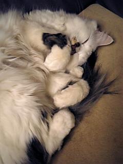 image/catlife-2006-03-23T23:03:27-1.jpg