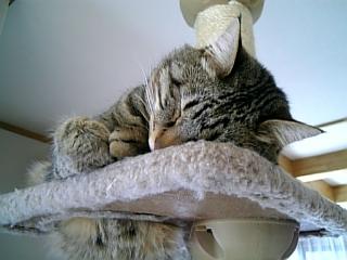 image/catlife-2006-04-03T08:36:40-1.jpg