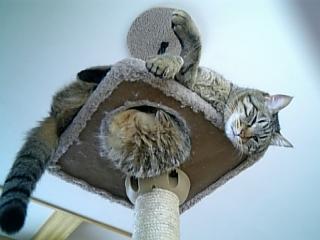 image/catlife-2006-04-14T08:51:20-1.jpg