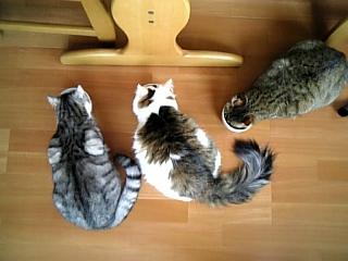 image/catlife-2006-04-14T15:46:00-1.jpg