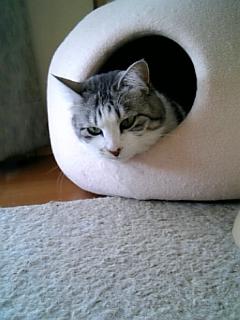 image/catlife-2006-04-18T12:13:34-1.jpg