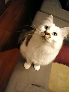 image/catlife-2006-04-21T00:45:37-1.jpg