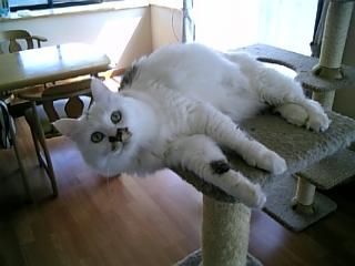 image/catlife-2006-04-24T09:37:26-1.jpg
