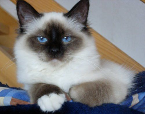 French Cat Names - French Names for Cats | Cat Names City