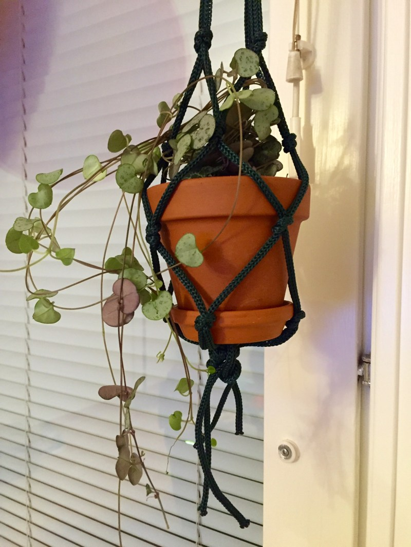 Large Of String Of Hearts Plant