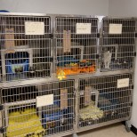 Stainless crates in our Isolation (ISO) room. When cats are admitted, they need to spend a few days here while their health is checked and they get their vaccinations. Once they are cleared to join the others, they are introduced to a colony room. Cats that are sick or recovering from medical procedures can also stay here.