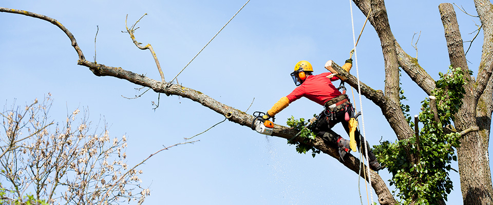 Saving Dead Trees