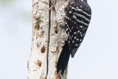 How to climb a tree risk-free