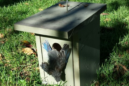 Fatal nesting material found in parks