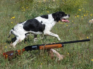10 consejos para disfrutar de nuestro perro al inicio de la caza