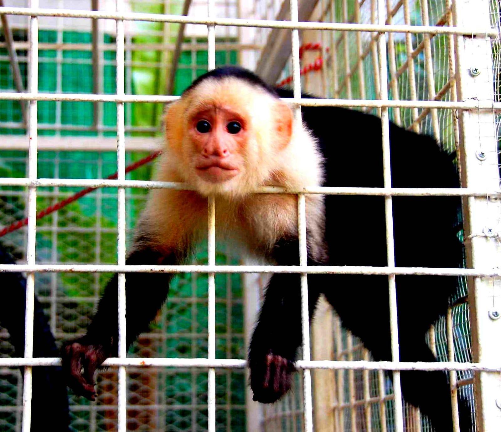 Fullsize Of Max The Monkey