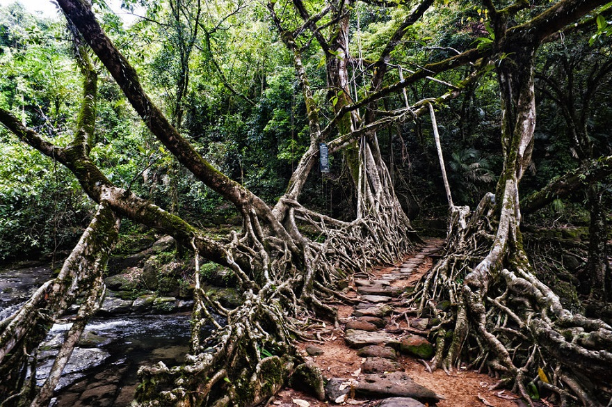 AD-The-34-Most-Beautifu-Forests-In-The-World-15