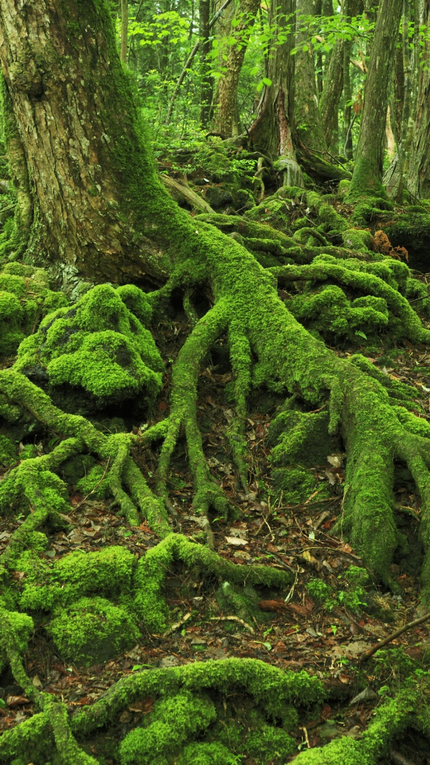 AD-The-34-Most-Beautifu-Forests-In-The-World-19