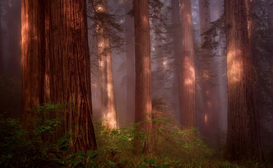 AD-The-34-Most-Beautifu-Forests-In-The-World-33
