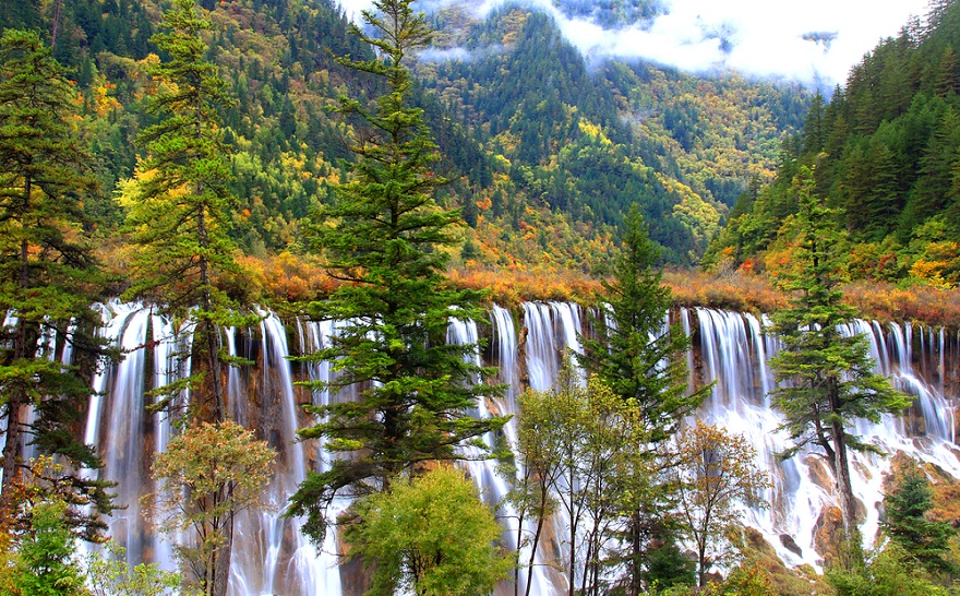 AD-The-34-Most-Beautifu-Forests-In-The-World-34