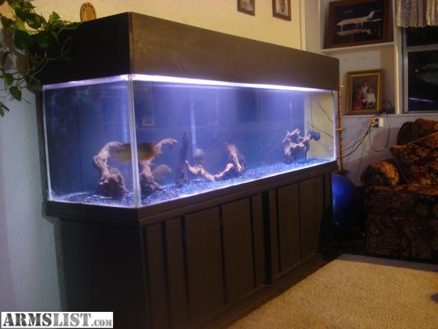 10 gallon fish tank craigslist huge aquarium for sale or for 10 gallon fish tank dimensions