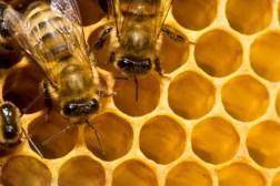 Honey Encryption trick