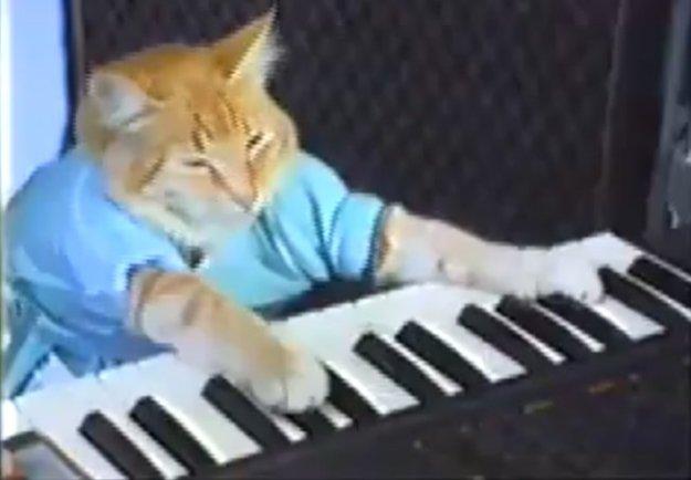 youtube-cat110525205626