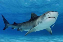 Human Life Earth Ribose Sharks