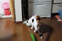 Funny Cat Video: Cucumber Scares Cat