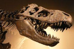 Tyrannosaurus_Rex_Skeleton