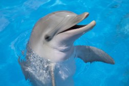 Dolphin Rescues Woman's iPhone Video