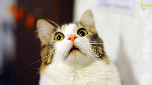 The hilarious cat myth story the internet is buzzing about bgr