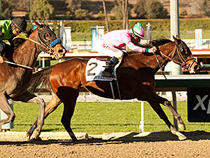 Will They Catch Fashion Plate in SA Oaks?