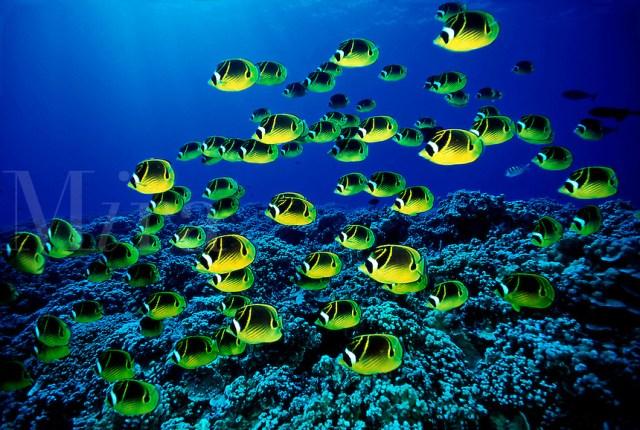 Seapicscom Ocean Wildlife Nature Pictures Stock Photo   Party