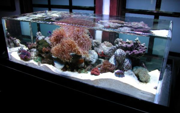Salt water fish tanks can mimic the ocean bed to perfection   Decoist