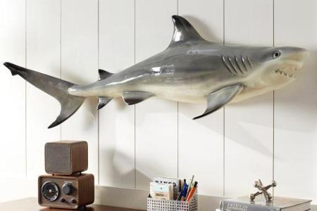 novelty shark decor pbteen