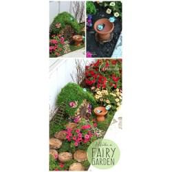 Small Crop Of Diy Fairy Gardens
