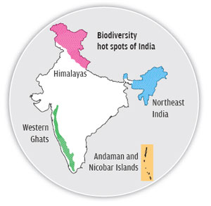 Hundreds of new plant and animal species added to India's known biodiversity every year.