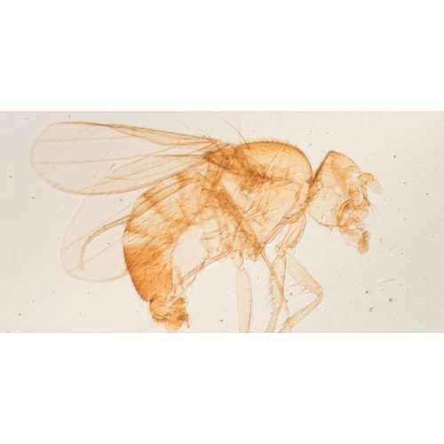 Medium Crop Of Joshuas Pest Control