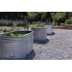 Small Crop Of Galvanized Water Trough