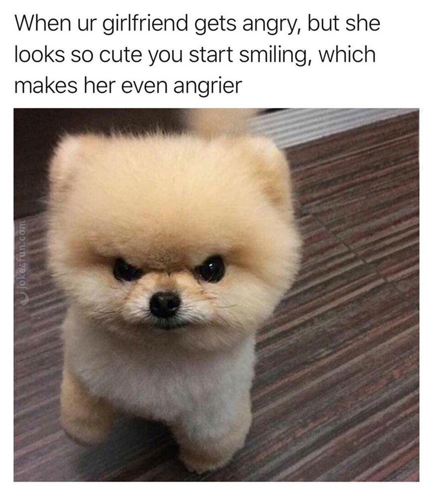 Fullsize Of Dog Joke Meme