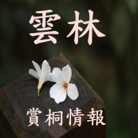 雲林賞油桐花季_sp