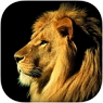 IOS限免、限時免費軟體APP遊戲-Cute Animals & wild Life Wallpapers 3