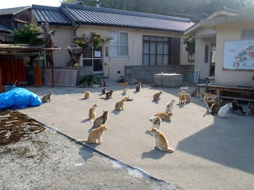 愛媛青島-貓島8