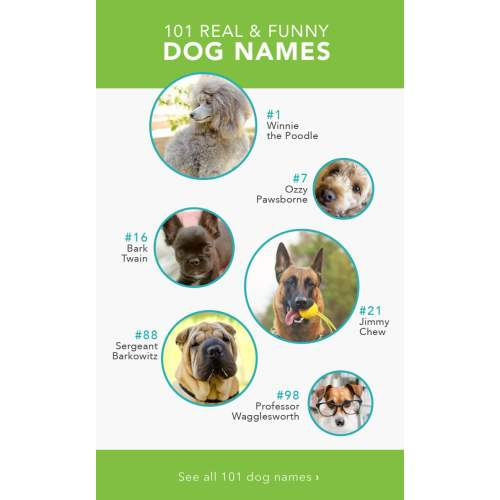 Medium Crop Of Badass Dog Names