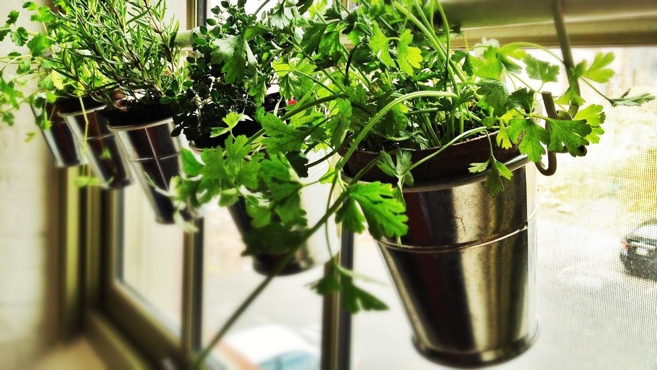 Fullsize Of Creating An Indoor Garden
