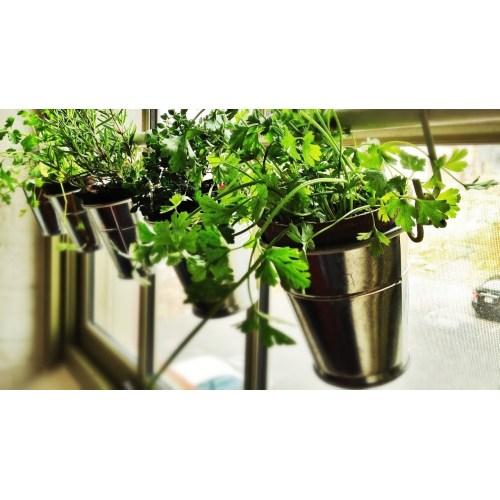 Medium Crop Of Creating An Indoor Garden