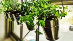 Small Of Creating An Indoor Garden