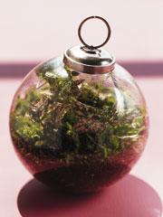 Ornament V
