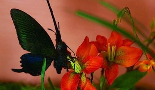 33_butterfly11.jpg
