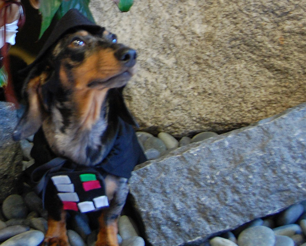 starwarsdogs_darthvader.jpg